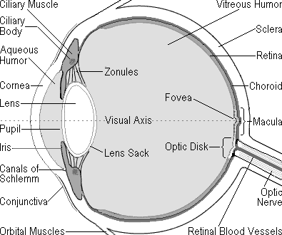 Macular degeneration eye health macular degeneration is a painless eye disease associated with ageing that causes progressive loss of detailed central vision ccuart Choice Image